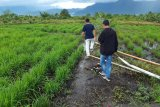 Anggaran pengelolaan pertanian padi di Lingga  berasal dari pusat