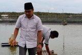 Yusran-Kisworo akan bangun Pelabuhan Perdagangan skala nasional di Labuhan Maringgai