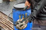 Usaha pengolahan ikan di Karawang menurun sekitar 30 persen