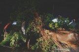 Dampak cuaca buruk di Palu