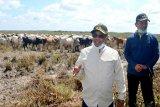Plt Gubernur Kalteng tinjau Sukamara sebelum kedatangan presiden