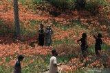 Kota Yogyakarta rencanakan bangun kebun florikultur untuk wisata alternatif