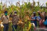 Pemkab Buol percepat pemulihan petani-UMKM  untuk perbaikan ekonomi