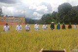 BMKG Padang Pariaman pandu petani bercocok tanam dan tingkatkan produktifitas pertanian (Video)
