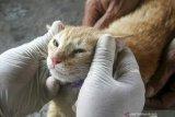 Terancam kena saksi, jika terbukti oknum Brimob banting anak kucing