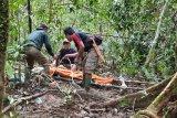 BKSDA Bengkulu meninggal saat survei gajah liar