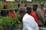 Pemkab Jayawijaya harapkan TNI bantu memotivasi petani Jayawijaya