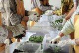 Mengenal wisata edukasi tanaman aromatik ciri khas Indonesia