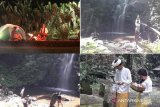 ISI Denpasar aktif promosikan objek wisata Desa Pujungan Tabanan