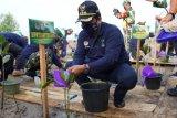 629 warga pesisir Sumsel jalankan program padat karya tanam mangrove