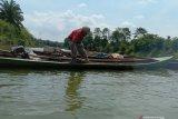 Ikan asli penghuni Way Sekampung  kini tidak ada lagi