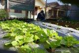 Budi Daya Tanaman Kebun Di Halaman rumah