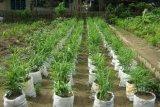 Masyarakat OKU Timur manfaatkan limbah kardus semen untuk  tanam sayur