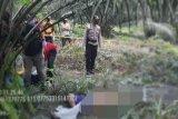 Pamit BAB, sopir truk ditemukan meninggal di kebun sawit