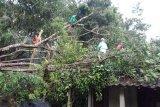 Angin kencang landa Magelang, pohon tumbang dan rumah rusak