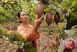 Parigi Moutong peroleh penghargaan kawasan perkebunan kakao terbaik nasional