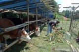 DP3 Sleman bersama relawan siap bantu pakan ternak pengungsi