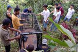 BKSDA Agam pasang perangkap di lokasi kambing warga dimangsa macan dahan