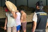 Sulut ekspor kelapa parut ke empat negara