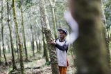 Sumatera Selatan dorong hilirisasi karet, siapkan dua produk unggulan