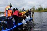 Palangka Raya lepas 91,5 ribu bibit ikan di Danau Hanjelutung