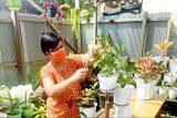 Usaha tanaman hias mulai dilirik warga Gumas