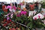 Calon pembeli mengamati berbagai jenis tanaman hias yang dipamerkan di salah satu pusat perbelanjaan di Kota Kediri, Jawa Timur, Jumat (20/11/2020). Berbagai jenis tanaman hias dipamerkan seiring meningkatnya permintaan masyarakat perkotaan untuk bercocok tanam guna mengisi waktu di rumah selama pandemi COVID-19. Antara Jatim/Prasetia Fauzani/mas.