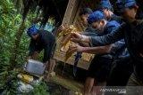 Tetua adat Baduy musnahkan madu palsu sebanyak satu drum dan 20 botol