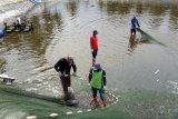 Shrimp Club Indonesia (SCI) sambut baik putusan MA bebaskan petambak udang