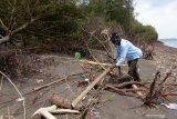 Petugas membersihkan pohon cemara yang tumbang di Pantai Cemara, Banyuwangi, Jawa Timur, Rabu (25/11/2020). Pengelola pantai mengatakan gelombang tinggi yang terjadi sejak (5/11) itu mengakibatkan penumpukan sampah di pantai dan sekitar seribu pohon Cemara tumbang. Antara Jatim/Budi Candra Setya/Um