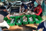 Nelayan Natuna waspada gelombang capai lima meter