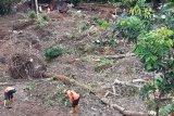 BPBD Banjarnegara pantau lokasi longsor di Gumelem