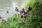 Prajurit Batalyon Intai Amfibi 2 Marinir (Yontaifib 2 Mar) Pasmar 2 mengevakuasi korban tenggelam di Kali Buntung desa Tawangsari, Taman, Sidoarjo, Jawa Timur, Rabu (25/11/2020). Pencarian korban tenggelam (Dani Pramana Putra) yang dilakukan 13 prajurit Batalyon Intai Amfibi 2 Marinir dibawah pimpinan Letda Mar Tri Candra berhasil menemukan korban tenggelam setelah semalaman melakukan pencarian. Antara Jatim/Dispen Kormar/Um
