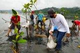 Warga Cilacap tanam mangrove dengan teknik klaster di perairan Nusakambangan
