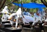 BPBD Yogyakarta sempat kewalahan melayani pemakaman prosedur COVID-19