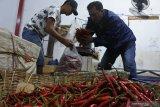 Pembeli memilih cabai besar merah di Pasar Tanjung Jember, Jawa Timur, Kamis (26/11/2020). Dalam seminggu terakhir harga berbagai jenis cabai mengalami kenaikan, seperti harga cabai besar merah dari Rp25.000 per Kg menjadi Rp29.000 per Kg, cabai rawit merah dari Rp22.000 per Kg menjadi Rp30.000 per Kg, dan cabai rawit hijau dari Rp8.000 per Kg menjadi Rp10.000 per Kg akibat musim hujan dan pasokan berkurang. Antara Jatim/Seno/Um