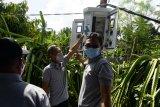 PLN NTB membantu petani buah naga berproduksi secara berkelanjutan