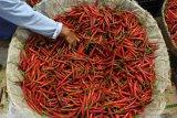 Harga cabe merah di Agam naik Rp10 ribu per kilogram