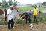 S Kalimantan planting trees to prevent landslide