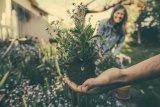 Bertanam bermanfaat bantu lawan penyakit hingga jaga daya ingat