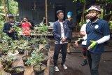Menikmati Rumah Bonsai Tambi Trubus di kawasan ekowisata Sukorejo