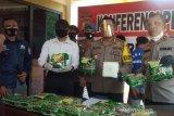 Polres Palu tangkap tiga jaringan mafia sabu beserta babuk 19 kilogram