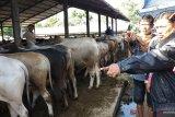 Pemkab Tanah Datar ajak petani asuransikan hewan ternak melalui asuransi AUTSK