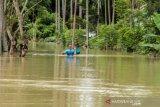Banjir Merendam 517 Desa Di Aceh Utara