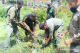 BKSDA Sultra evakuasi seekor buaya resahkan warga Kendari