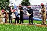 Bupati Barut  tebar benih nila melalui program mina padi