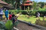 Taman Kelinci Betawi di tengah pandemi
