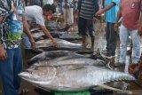 SKIPM: Pengiriman hasil perikanan domestik dari Padang pada Januari 2021 capai Rp19,08 miliar