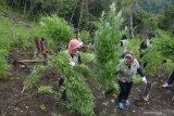 Meksiko menerbitkan regulasi atur penggunaan ganja medis