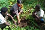 Bhabinkamtibmas ajari warga bercocok tanam di perbatasan RI-PNG